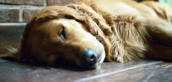 Why should you take sleep VERY seriously?