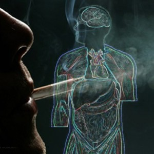 SMOKING AND ADRENALINE: Nicotine is a stimulant. When you smoke, the adrenal glands start working and in doing so the heart rate increases, the blood vessels contract and air passages dilate. Years of lighting up have made a smoker's adrenal glands weak and tired because of constant over-stimulation.