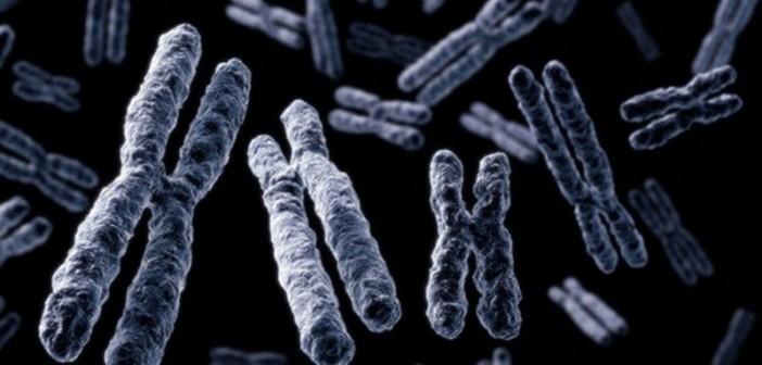 New study: Transcendental Meditation and lifestyle modification increase telomerase